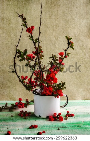 Still life with a bouquet of barberry - stock photo