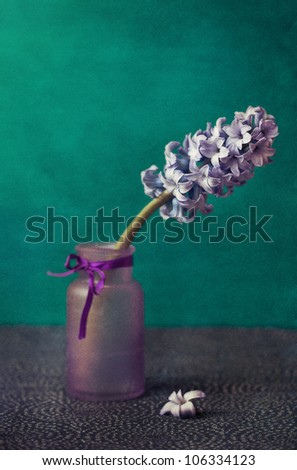 Still Life with a hyacinth flower .soft focus and old paper texture . - stock photo