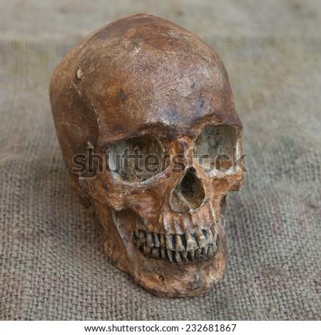 Still Life with a Skull - stock photo