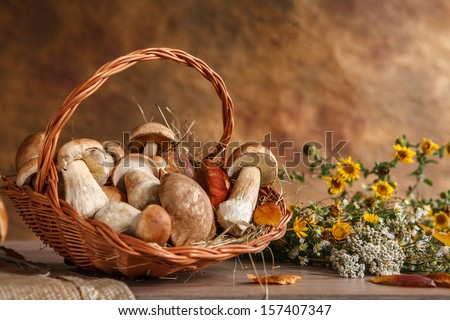 Still life with basket of mushrooms / studio photography of wicker basket with eatable mushrooms  - stock photo