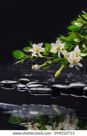 Still life with gardenia with therapy stones - stock photo
