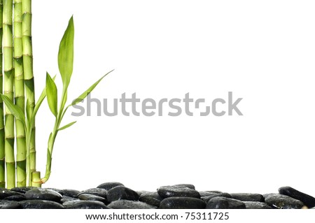 Still life with green bamboo plant with stones - stock photo