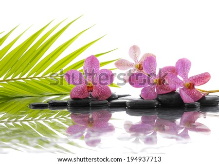 Still life with green palm and stones with pink flower - stock photo