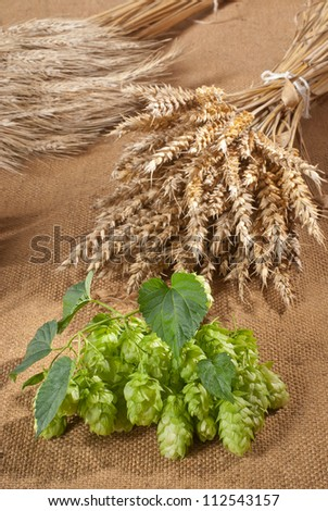 still life with hop cones - stock photo