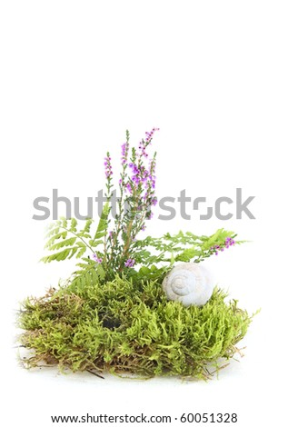 Still life with moss, fern, heather and shell of snail - stock photo
