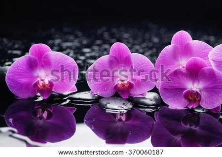 still life with orchid and candle on black stones  - stock photo