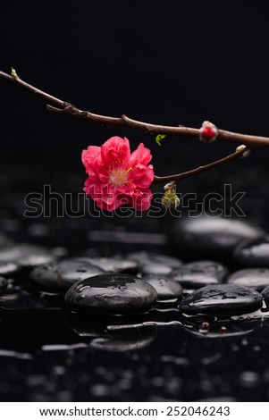 still life with pebble and with red cherry blossom - stock photo