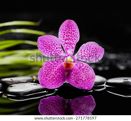 Still life with pink orchid, green leaf and zen stones - stock photo