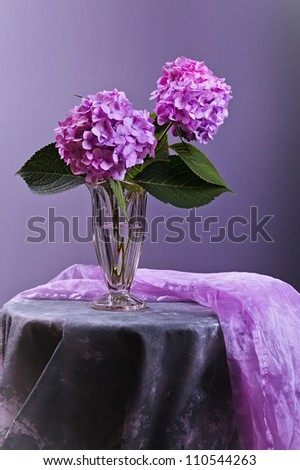Still-Life with purple Hortensia flowers in glass vase - stock photo