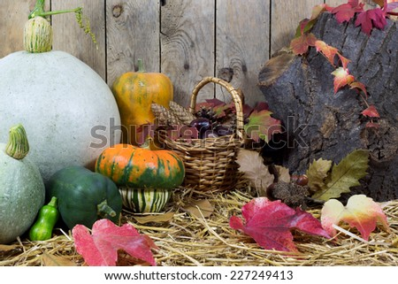 Still Life with Small and Big Pumpkins, Wicker Basket Filled with Pine Cones, Acorns, Chestnuts and Autumn Leaves on a Hay, Vintage Wooden Planks  Background  - stock photo
