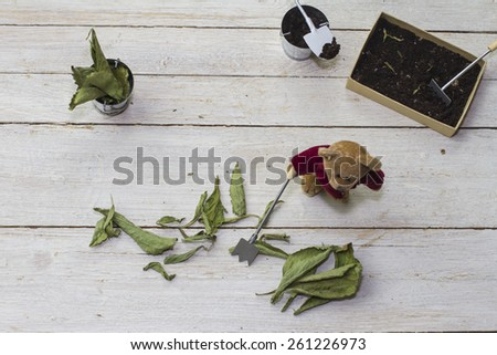 Still Life with teddy with garden stevia leaves to teach this ingredient to children in a funny way. - stock photo