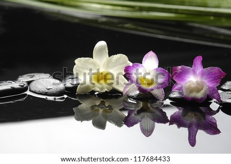 Still life with three orchid flower and stone with green plant - stock photo