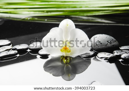 Still life with white orchid with black stones with,green plant - stock photo
