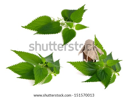 Stinging Nettle Isolated on white background (Urtica Dioica) - stock photo