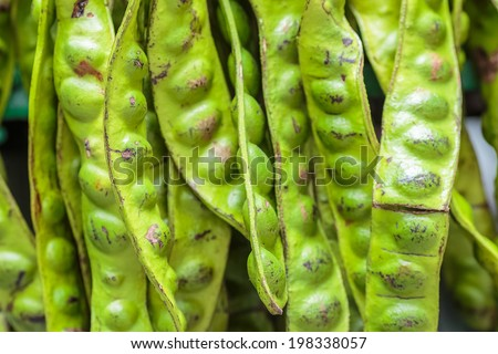 Stink Bean,Parkia Speciosa twisted cluster beans ,Big pod of stinking beans, a special beans in many dishes of southeast Asian Food. Tropical stinking edible beans - stock photo
