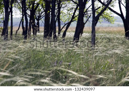 Stipa steppe in a clearing in the woods on a sunny day - stock photo