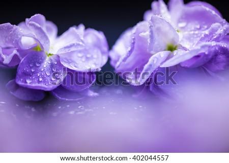 Stock, flowers, close-up, macro. - stock photo