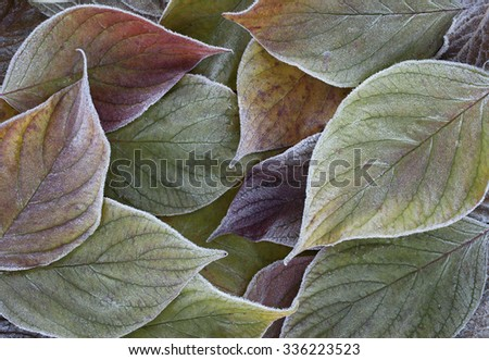 Stock image of beautiful frosty leaves background - stock photo