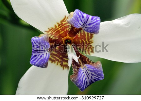 Stock image of close-up flower   - stock photo