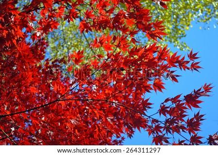 Stock image of fall foliage at Boston   - stock photo