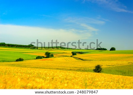 Stock image of golden meadows and fields in spring against a blue sky with with white clouds - stock photo