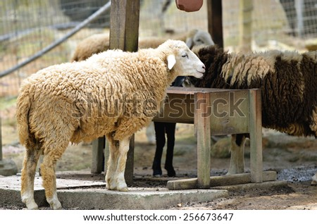 Stock image of group of sheep   - stock photo
