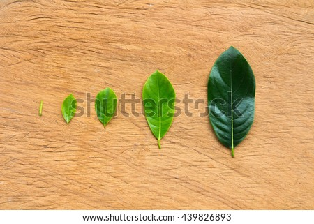 stock image of the small leaf growing - stock photo