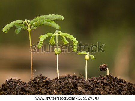 stock image of the small plant growing - stock photo