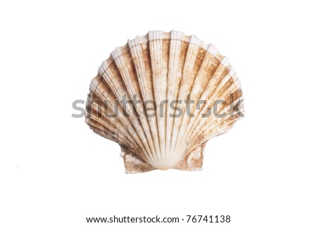 stock photo of sea scallop shell - stock photo