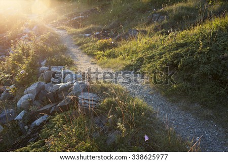 Stock photo of small backlit path between plants and stones at summer at Helgeland, Norway.  - stock photo