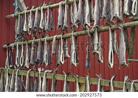 Stockfish is hung on racks for preservation - stock photo