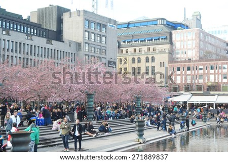 STOCKHOLM, SWEDEN - APRIL 19, 2015: Cherry blossom in the park Kungstr�¤dg�¥rden.  - stock photo