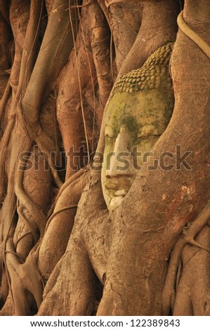 Stone buddha head in the tree roots Ayutthaya was old capital of Thailand - stock photo