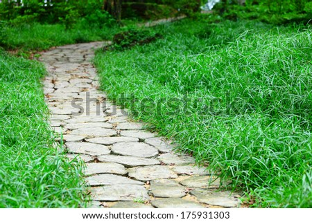Stone path in forest - stock photo