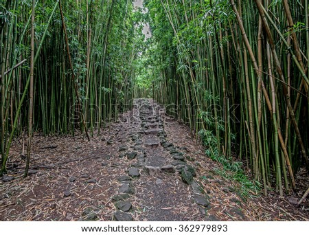 Stone path in the bamboo forest along the Pipiwai Trail in Haleakala National Park - stock photo