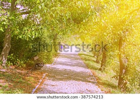 Stone path with a bench in the park among the green trees. Sunlight - stock photo