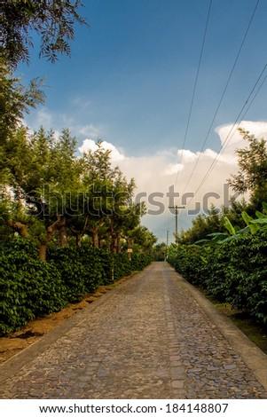 Stone road at coffee farm in Guatemala - stock photo