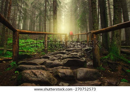 stone road in the forest - stock photo