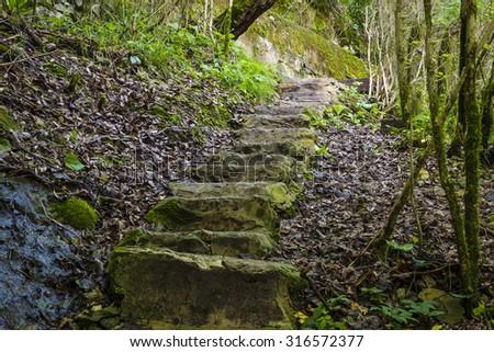 stone staircase into the gorge - stock photo