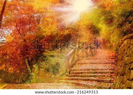 Stone stairs in an autumn park. - stock photo