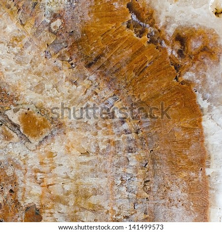 stone texture - background - stock photo
