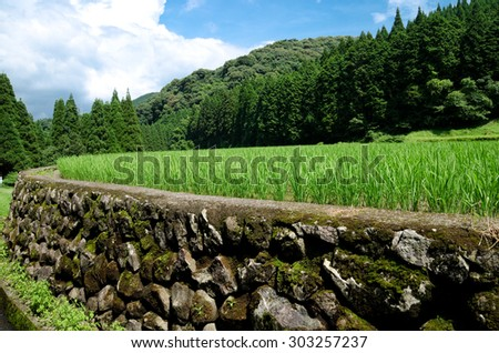 Stone wall and green rice field in front of mountain under sky - stock photo