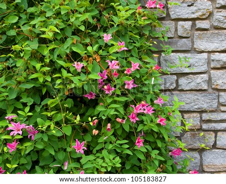 Stone wall with flowers - stock photo