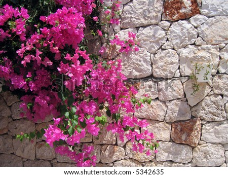 stone wall with ivy and flowers and begonvils - stock photo