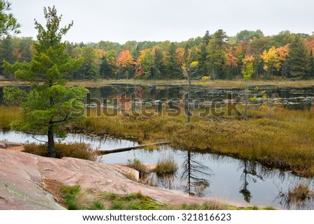 Stoned bog edge with several green trees and multicoloured fall trees at the background, Killarney, Canada - stock photo