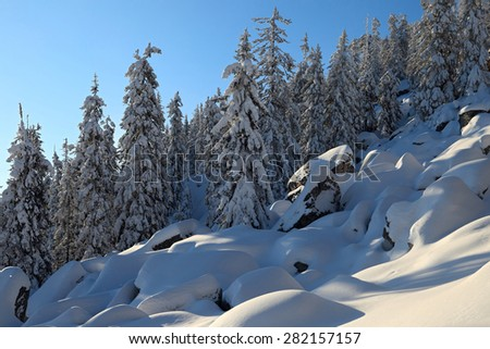 Stones and fir forest are covered by the snow on slope of the Malinovaya mount in a clear winter day, South Urals, Russia. - stock photo