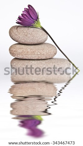 stones and flowers in water - stock photo