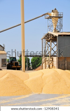Storage and conveyor equipment for corn at a large feed lot - stock photo