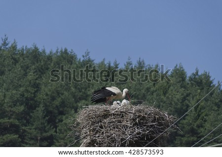 Stork nest on top of post with old and young  - stock photo