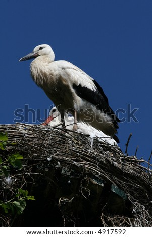 Stork sitting in nest - stock photo